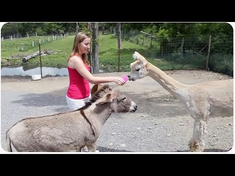 The Jealous Donkey | Exclusive Relationship