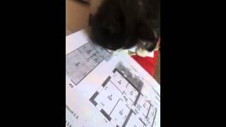 Умный котёнок!:-) Учится читать чертежи!:-)