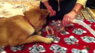 Dog Nebulizer - How To Start Happy