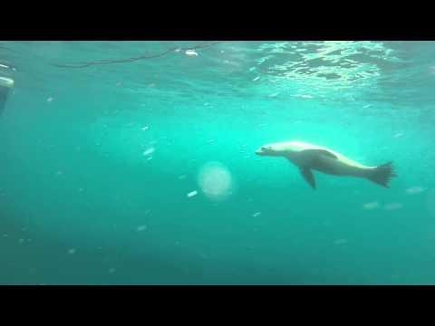 White Shark Cage Diving 2015 - Farallon Islands