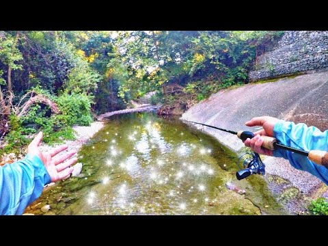 Fishing Hidden Creeks Deep In The Woods Of Dallas, TX