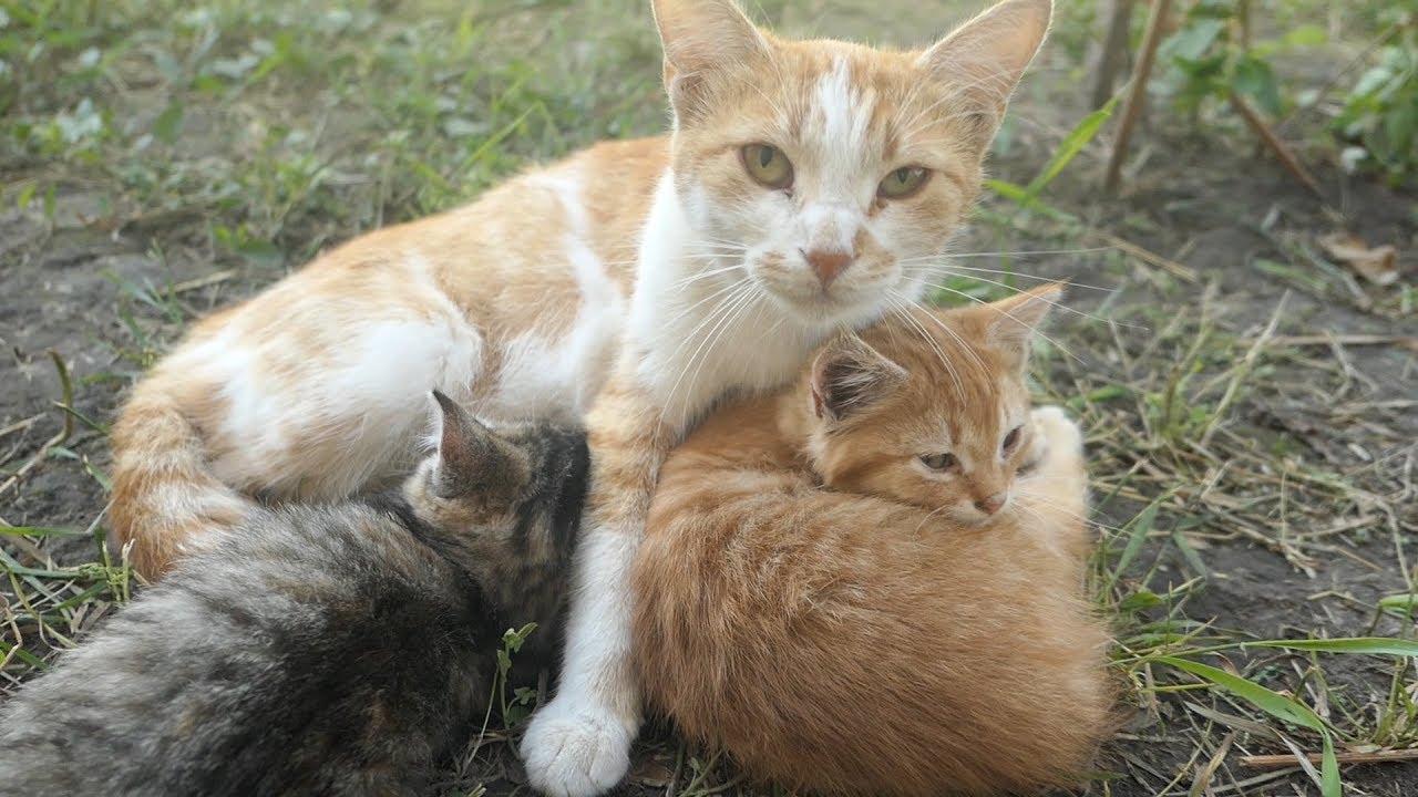 kitten bites everything