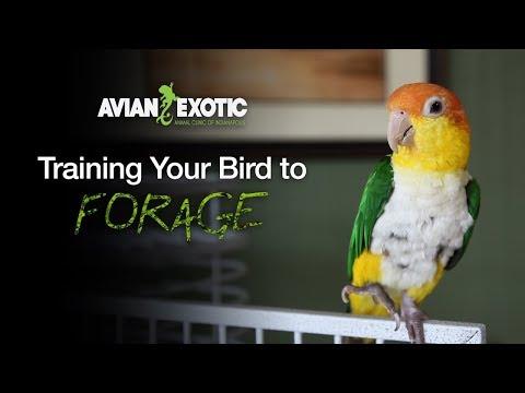 Training Your Bird to Forage