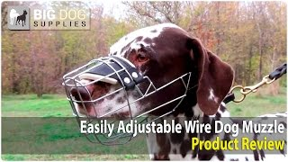Dalmatian And Other Dogs Wearing Wire Cage Dog Muzzle With One Strap