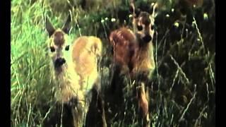 В объективе   животные  Заяц русак