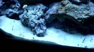 Ltkenbo's 55 Gallon Reef Tank Update February 26, 2010