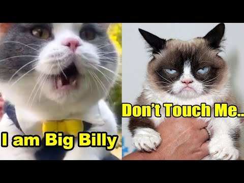 These Cats & Dogs Can Speak English Better Than Hooman