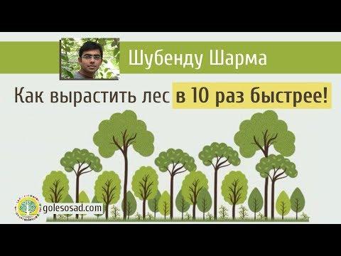 Вопрос: Сколько лет растут деревья?