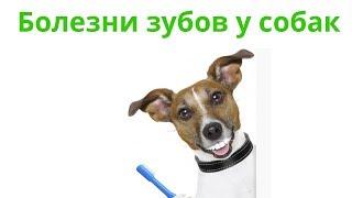 Болезни Десен У Собак & Болезни Зубов У Собак. Ветклиника Био-Вет