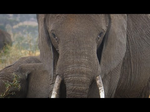 Faces of Africa - Saving The Savannah