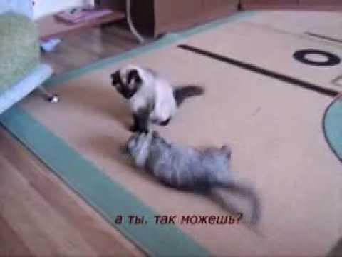 Кот делает сальто