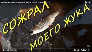 видео Голавль - заметки о ловле