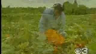 Springdale Farms Pumpkin Patch, Eyewitness News