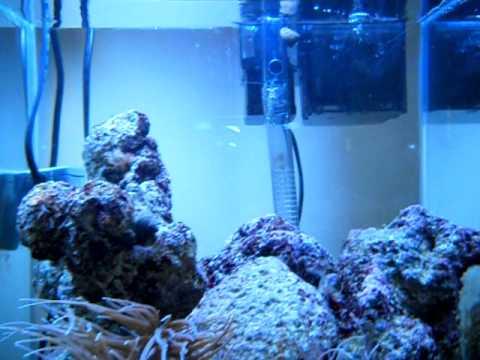 Acquario marino mediterraneo 30 litri minimed youtube for Acquario marino