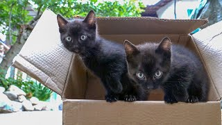 Twin Black rescue Kittens saved - Black cats matter, My first meet with abandoned kittens
