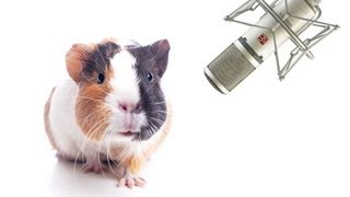 Pet Interviews - Guinea Pig (teaser)