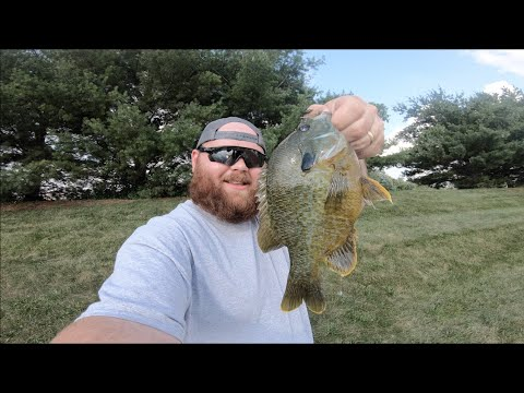 Fly Fishing Indiana BLUEGILL And BASS In Intense HEAT!!!