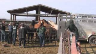 Horses and Mules Rescued