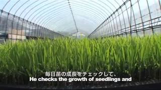 A Day of Japanese Rice Farmers Vol.5: Seeding and Raising seedlings