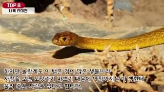 [내맘대로 랭킹] 세계에서 가장 위험한 독을 가진 동물 TOP 10