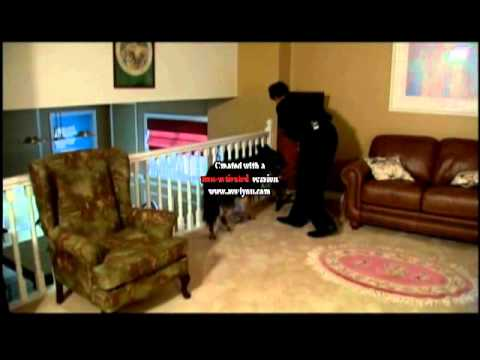 Bed Bug Sniffing Dog on The Pet Network - Purity Pest Control