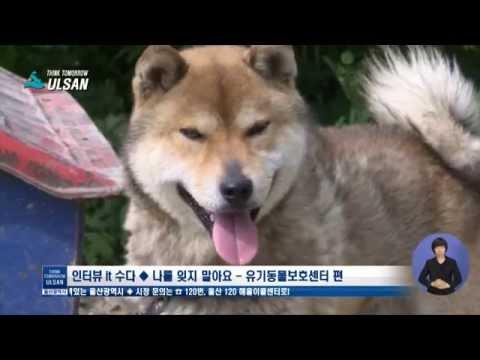 울산시(Ulsan) l 2015.5.28 울산시정뉴스 [인터뷰/울산 유기동물보호센터]
