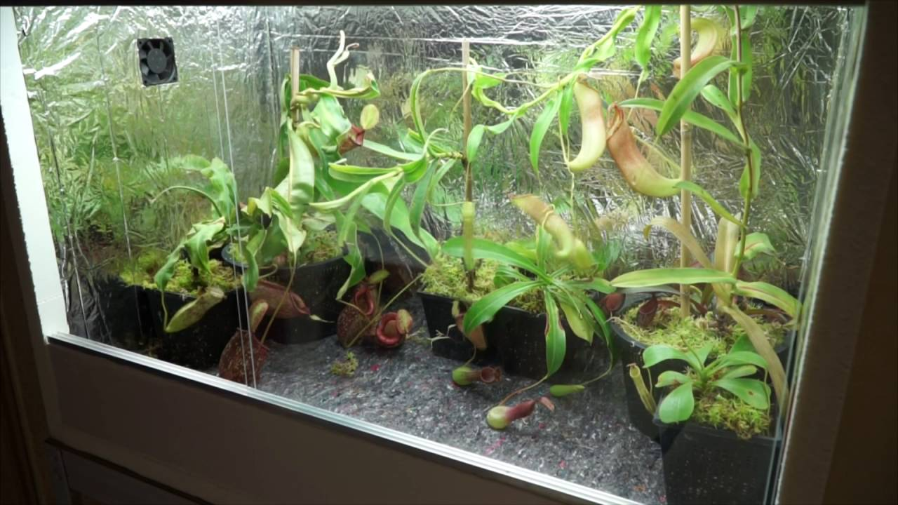Am nagement terrarium plante carnivore youtube for Plante carnivore
