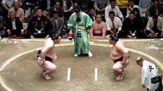 Download Sumo Yokozuna Hakuho fight Mp3 and Videos