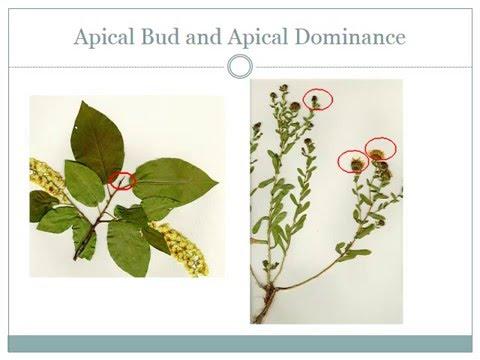 Rangeland Plant Morphology