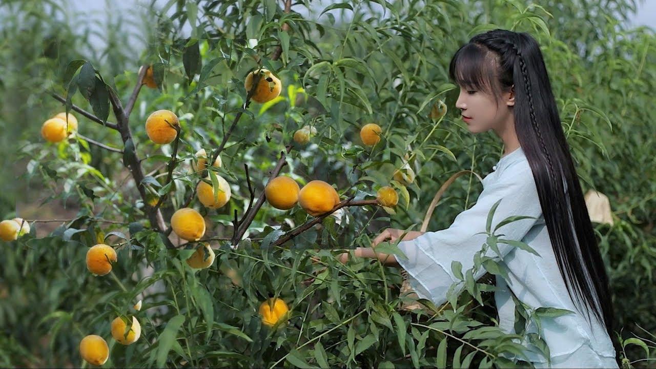 iced can of yellow peaches 黄桃罐头:炎炎夏日,来罐冰镇黄桃罐头怎么样?丨Liziqi Channel