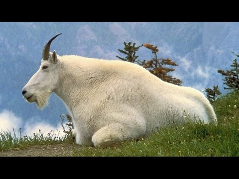List of Animals - Name of Animals M - Learn English - Vocabulary Building
