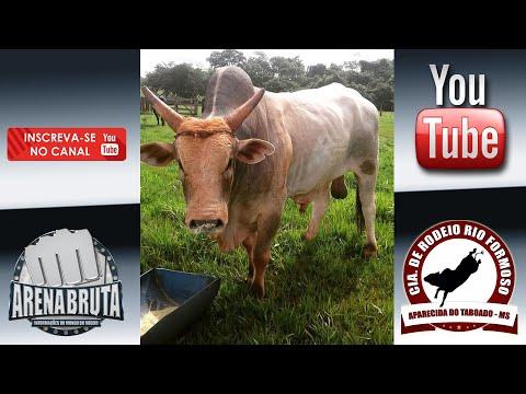 Conheça os touros da Cia. RIO FORMOSO