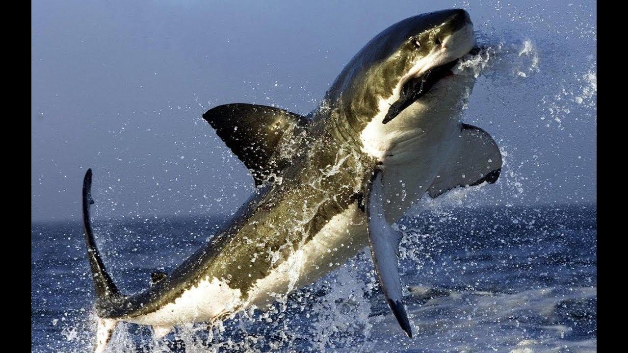 Дикая Африка. Акулы. Смерть. Ужас Африканского Побережья.