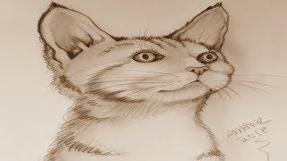 Como Iniciar o Desenho -  Desenhando um Gato