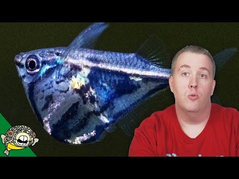Aquarium Fish Unboxing 2018