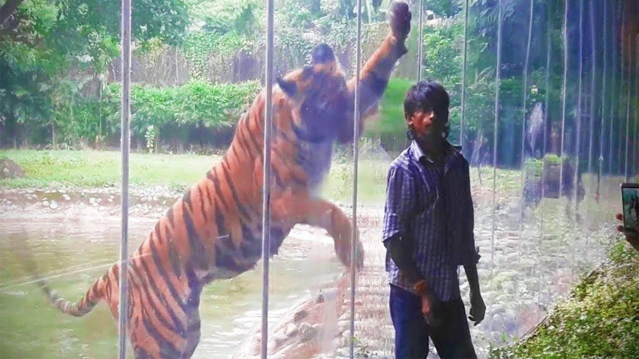لحظات تحطم الزجاج بين البشر و الحيوانات