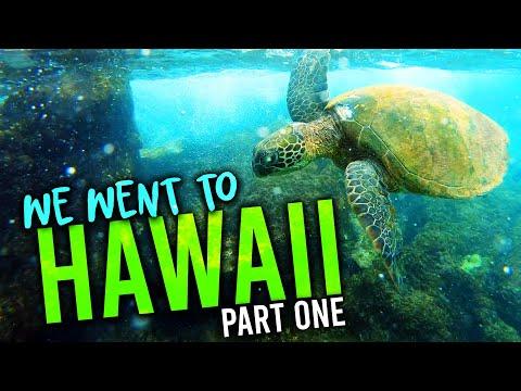 Sheraton Maui Resort Tour 2019 & Snorkeling With Sea Turtles   Adventure Vlog