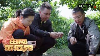 《田间示范秀》 20200427 解锁种养好方法 CCTV农业