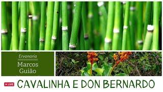 Cavalinha & Don Bernardo: Conversando sobre plantas medicinais com Marcos Guião