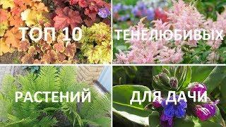 🌱10 тенелюбивых растений для сада🌱ХОСТА, ГЕЙХЕРА, АСТИЛЬБА, ПАПОРТНИК, ДИЦЕНТРА, ГОРТЕНЗИЯ, БРУНЕРА