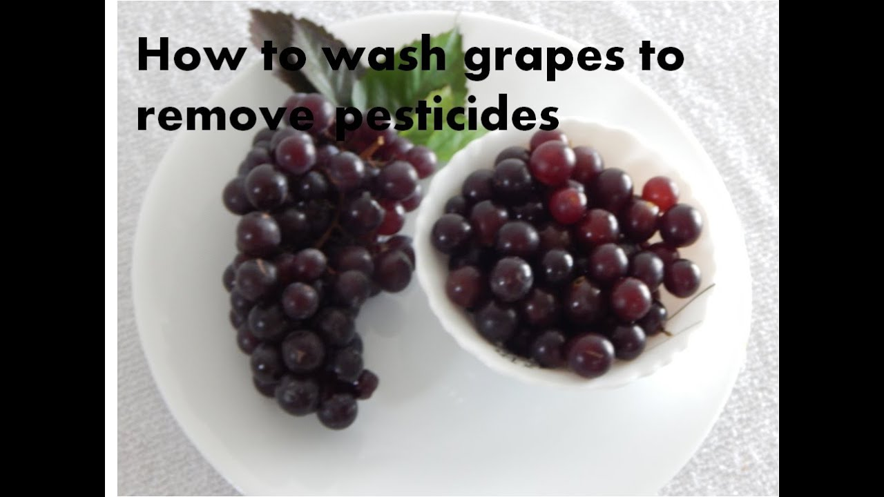 How To Clean Grapes Properly To Remove Pesticides Natural Way To Wash Grapes In Tamil Youtube