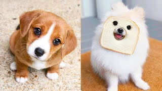 Baby Dogs  Cute and Funny Dog Videos Compilation #28 | Aww Animals
