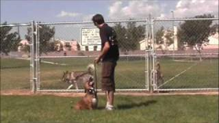 This Video Is Unavailable.     Dog Training - Solving Aggression Problems