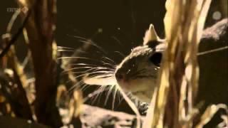Познавательный развивающий фильм для детей 'О чём говорят животные' серия 2