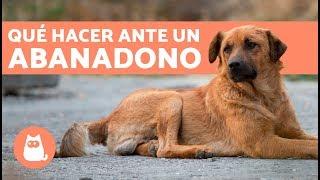 Cómo actuar si te encuentras un perro abandonado
