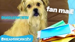 Dog Answers Fanmail! | DINGLESWORTH