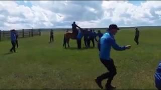 Мастер класс по обучению диких лошадей от монгольской группы каскадеров #ТЭНГЭРИИНЧОНО. 2