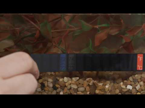 Tetra® Products — 55 Gallon Aquarium Kit Setup