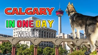 calgary downtown tourist attraction in one day with husky