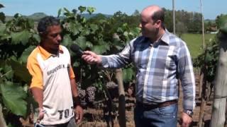 Fertilizantes Naturais adubação da Videira  Agroecologia 2